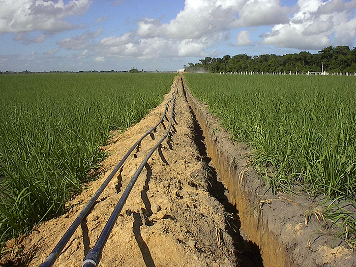 Alagoas secondary recovery
